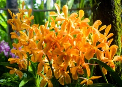 National Orchid Garden - sree is travelling (11)