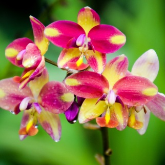 National Orchid Garden - sree is travelling (14)