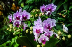 National Orchid Garden - sree is travelling (18)