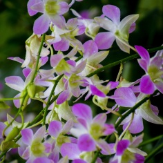 National Orchid Garden - sree is travelling (2)