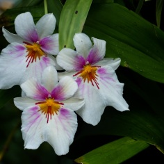 National Orchid Garden - sree is travelling (22)