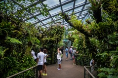 National Orchid Garden - sree is travelling (24)