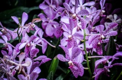 National Orchid Garden - sree is travelling (7)