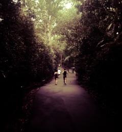 Singapore Botanical Gardens - sree is travelling (1)