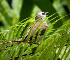 Singapore Botanical Gardens - sree is travelling (16)