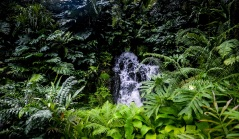 Singapore Botanical Gardens - sree is travelling (17)
