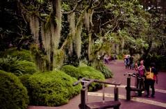 Singapore Botanical Gardens - sree is travelling (19)
