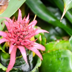 Singapore Botanical Gardens - sree is travelling (21)