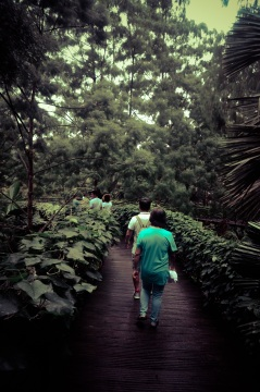 Singapore Botanical Gardens - sree is travelling (25)