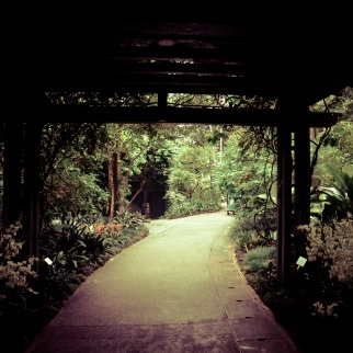 Singapore Botanical Gardens - sree is travelling (28)