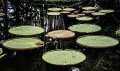 Singapore Botanical Gardens - sree is travelling (29)
