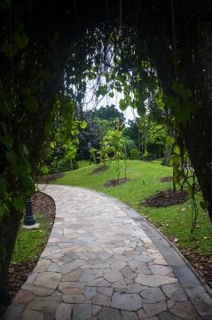Singapore Botanical Gardens - sree is travelling (3)