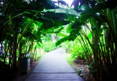Singapore Botanical Gardens - sree is travelling (34)