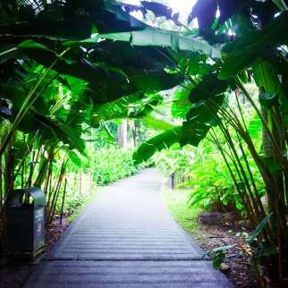 Singapore Botanical Gardens - sree is travelling (34)