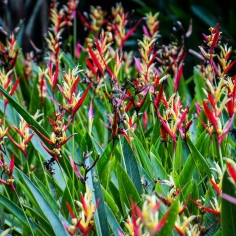 Singapore Botanical Gardens - sree is travelling (35)