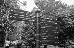 Singapore Botanical Gardens - sree is travelling (4)