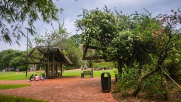 Singapore Botanical Gardens - sree is travelling (5)