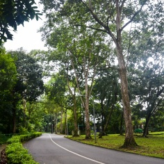 Singapore Botanical Gardens - sree is travelling (6)