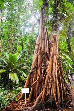 Singapore Botanical Gardens - sree is travelling (8)