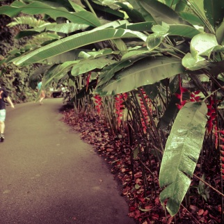 Singapore Botanical Gardens - sree is travelling (9)