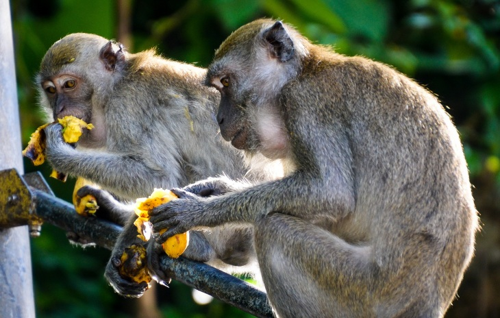 Simians at Batu caves - Sree is travelling (3)