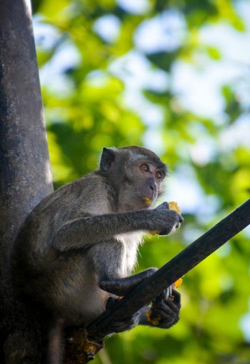 Simians at Batu caves - Sree is travelling (4)
