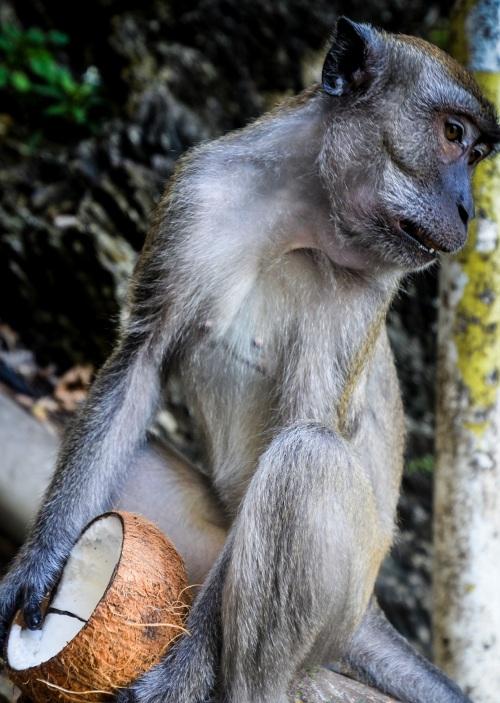 Simians at Batu caves - Sree is travelling (7)