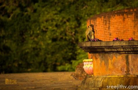 Picture of Jethawanaramaya dagoba, Anuradhapura, Sri Lanka (8)