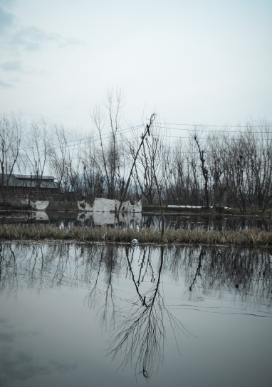 Dal Lake reflections, Sree is travelling (3)