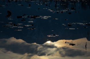 Dal Lake reflections, Sree is travelling (6)