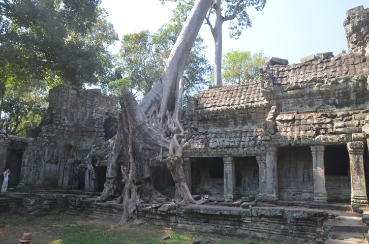 Trees growing out of the ruins of Preah Khan,