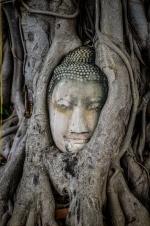Buddha Head in Tree Roots, Wat Mahathat, Ayutthaya, Thailand