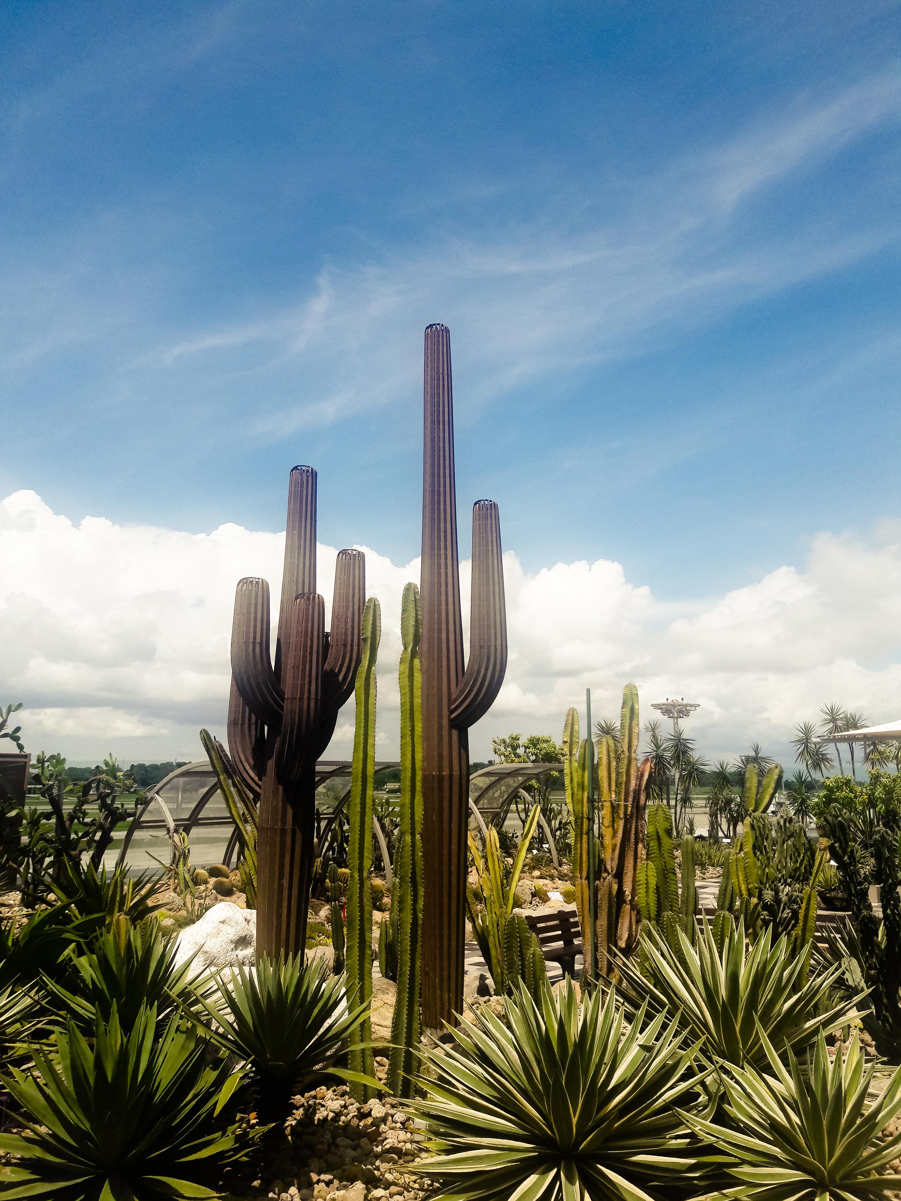 Cactus Garden, Changi Airport, Singapore