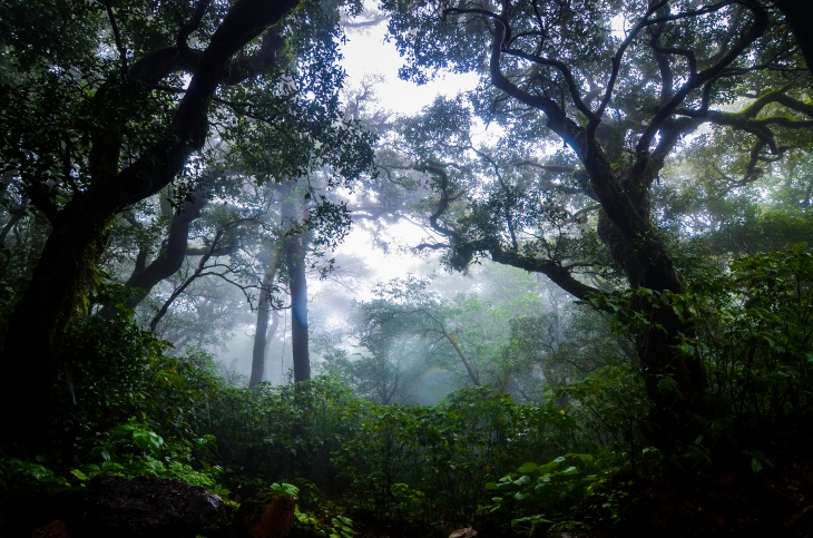 Kodachadri forest, Karnataka, India
