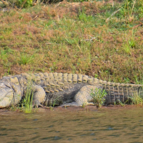 Panna National Park, sree is travelling